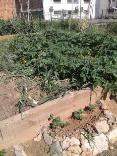 LA SIEI també treballa al hort